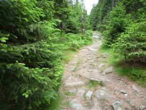 Trails anstatt Wanderautobahnen auf dem Hexenstieg