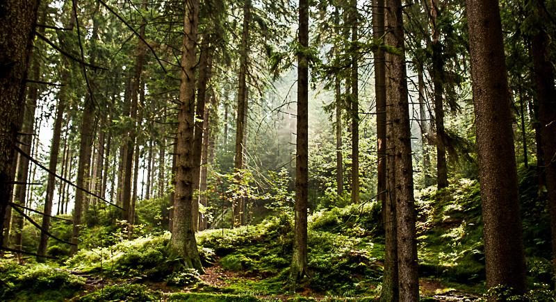 Dammgraben im Harz