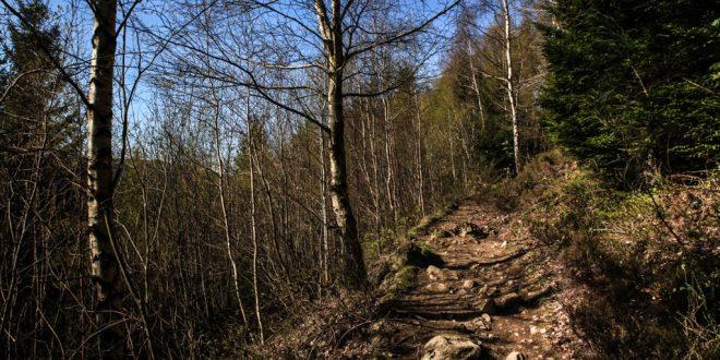 Harzer Wandernadel | Stempelstelle 117 118 | Kästeklippe Treppenstein