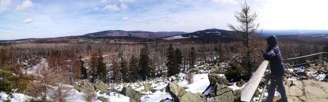Der Wald im Hochharz