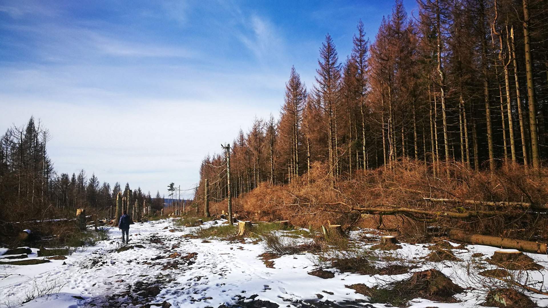 Wald Nationalpark