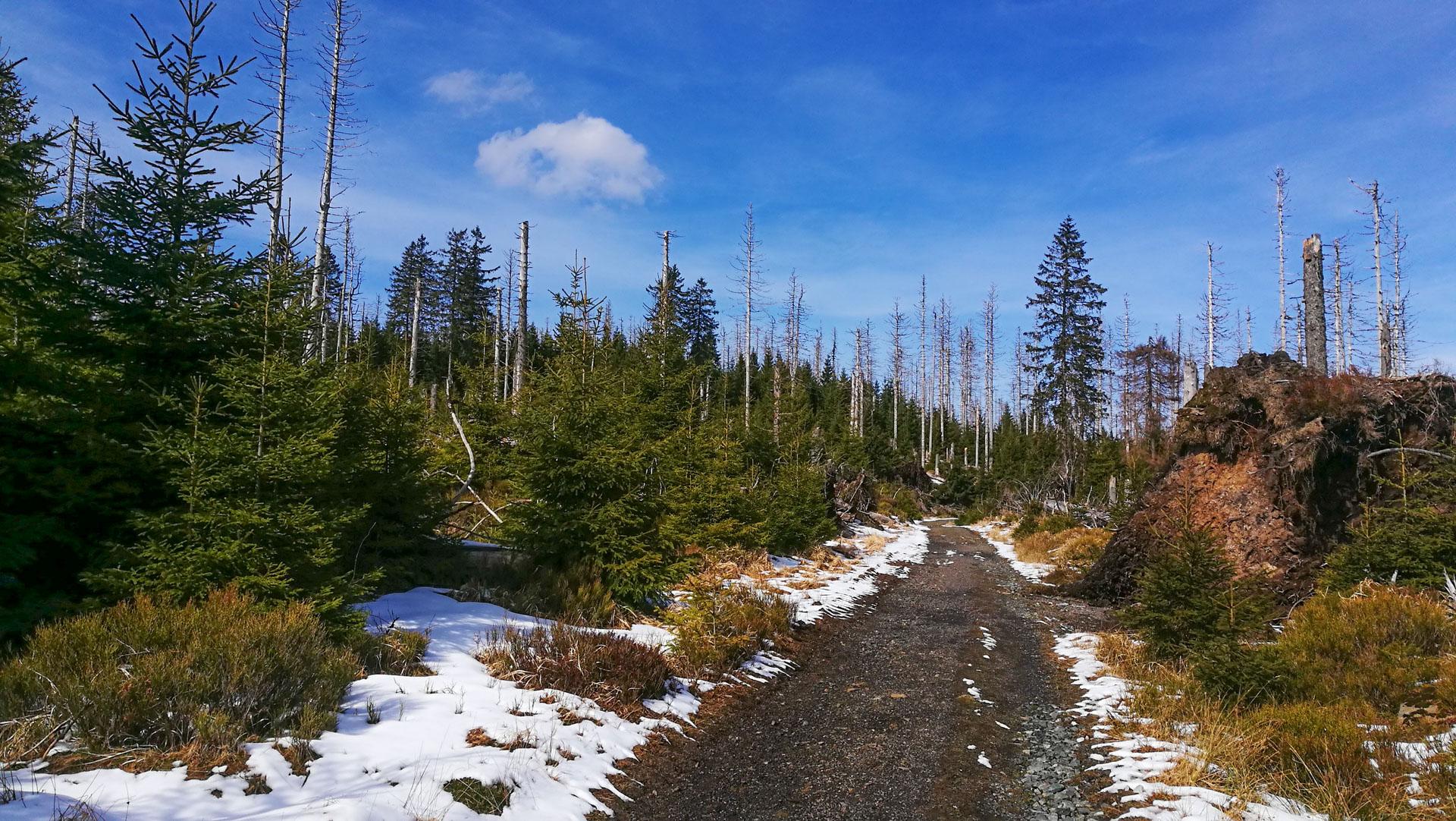 Wald Nachwuchs