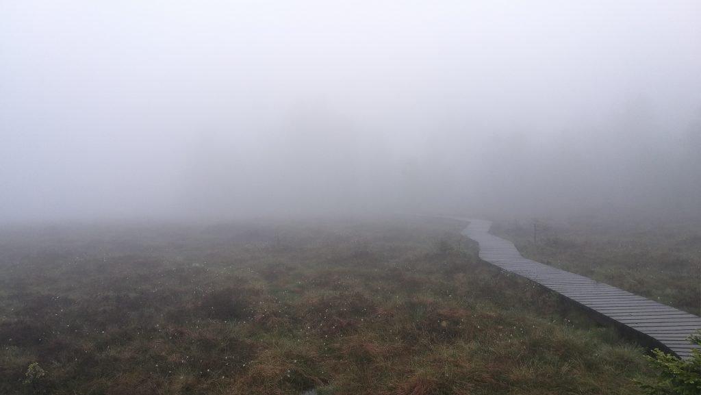 nebel im harz